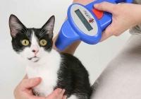 Cães e gatos recebem microchip em São Vicente